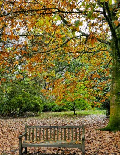 Clyne Gardens in Autumn