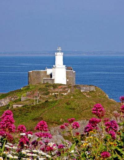 Mumbles Lighthouse pink flowers in foreground