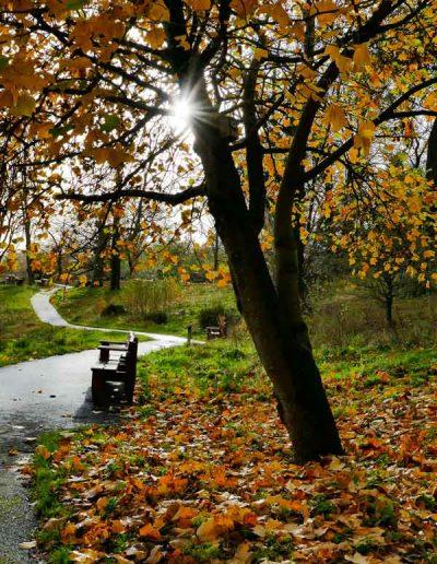 Singleton Park in Autumn
