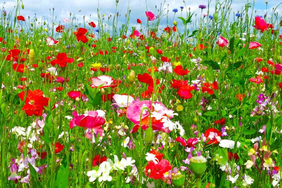 Wildflower Planting across Swansea